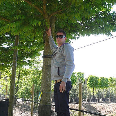 Matt standing by one of the trees.