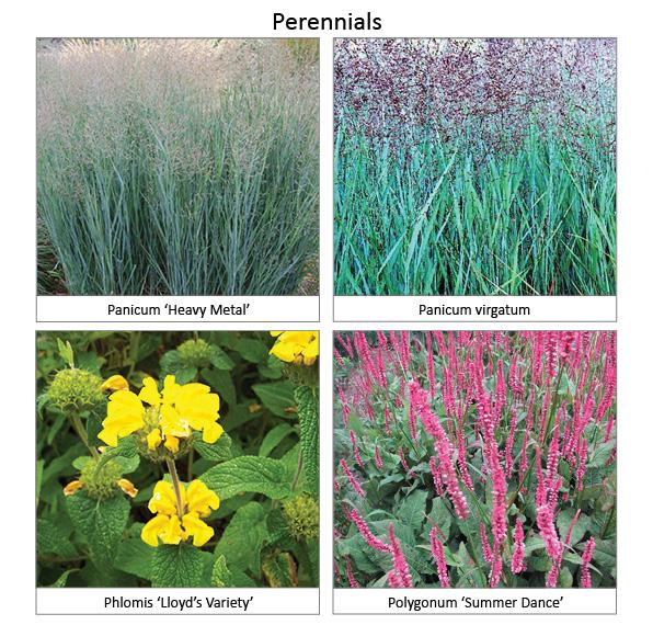 Perennials4