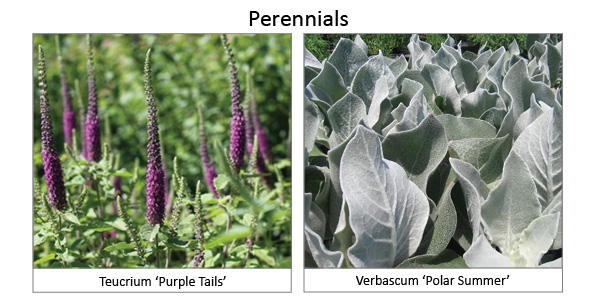 Perennials6
